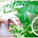 Taller de Insecticidas naturales para plantas y hortalizas